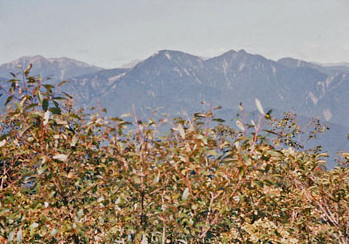 199009-02.jpg