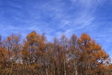 20111113_110028.jpg